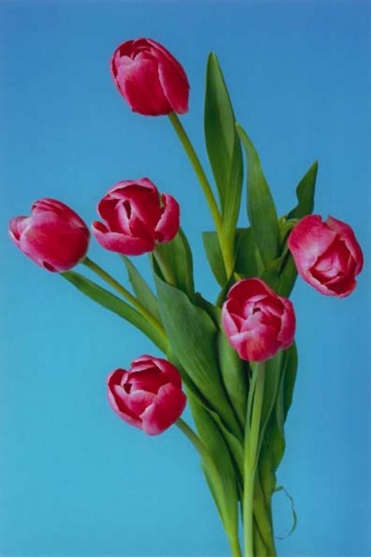 color photograph, 170 x 120 cm