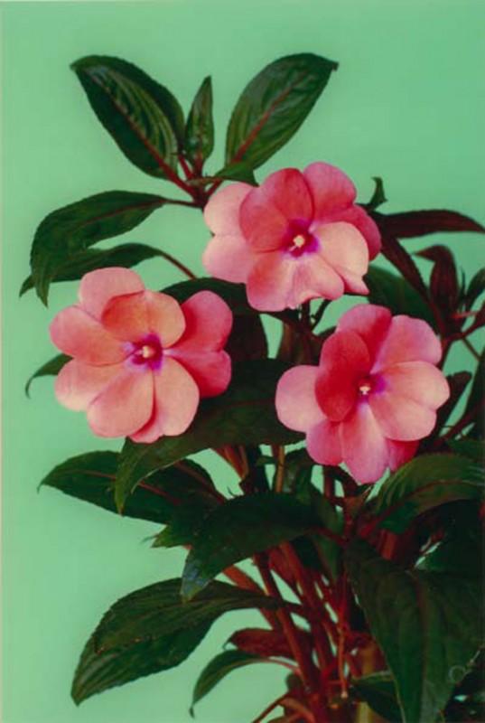 color photo, 170 x 120 cm