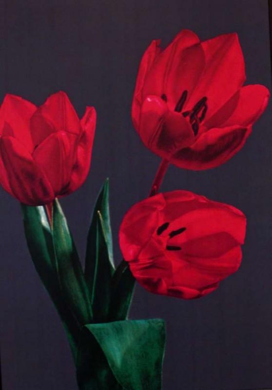 color photograph, 83 x 58 cm