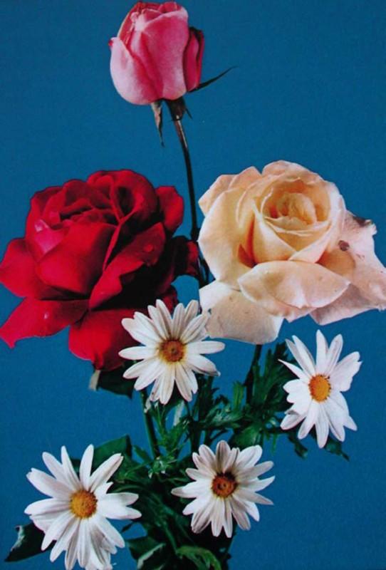 color photo, 83 x 58 cm