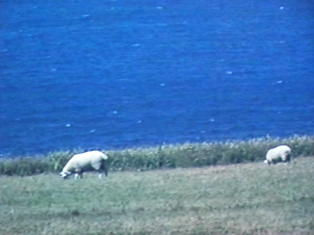 2001, video, color, silent, 60mn 27s, edition of 4